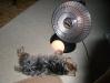 heat_lamp